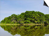 Everglades, UNESCO World Heritage Site, Florida, United States of America, North America Prints by Michael DeFreitas