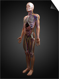 Human Anatomy, Artwork Posters by  SCIEPRO