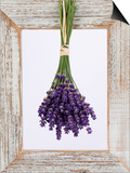 Lavender Hanging Up to Dry Prints by Ottmar Diez