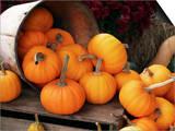 Harvested Pumpkins Prints by Tony Craddock