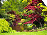Acer Trees and Pond in Sunshine, Gardens of Villa Melzi, Bellagio, Lake Como, Lombardy, Italy Posters by Peter Barritt