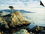 The Lone Cypress Tree on the Coast, Carmel, California, USA Prints by Michael Howell