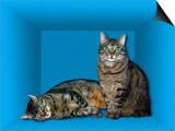 Schrodinger's Cat, Artwork Prints by Victor De Schwanberg