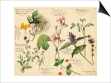 Wild flowers composite Poster by Lilian Snelling