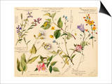 Wild flowers composite Prints by Lilian Snelling