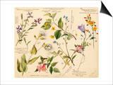 Wild flowers composite Prints by Lilian Snelling