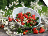 Fresh Strawberries in Sieve Surrounded by Sloe Blossom Posters by Martina Schindler