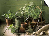 Still Life with Various Herbs in Pots Posters by Gerrit Buntrock