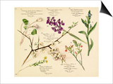 Wildflower composite Prints by Lilian Snelling