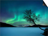 Aurora Borealis over Sandvannet Lake in Troms County, Norway Prints by  Stocktrek Images