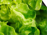 Fresh Lettuce Prints by Kai Stiepel