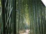 Bamboo Forest, Ginkakuji Temple, Kyoto, Japan Prints