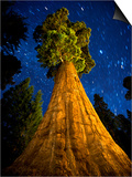 Giant Sequoia under the Milky Way Posters by Ian Shive