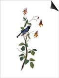 Audubon: Warbler, 1827-38 Poster by John James Audubon