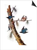 Audubon: Nuthatch Posters par John James Audubon