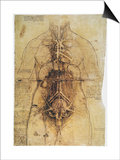Leonardo: Anatomy, C1510 Posters by  Leonardo da Vinci