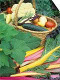Vegetable Harvest Poster by David Cavagnaro