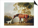 Bay Horse and White Dog Art by George Stubbs