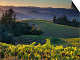 Healdsberg, Sonoma County, California: Vineyard and Winery at Sunset. Print by Ian Shive
