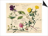 Wildflower composite Posters by Lilian Snelling