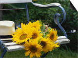 Sunflowers on a Garden Chair Prints by Roland Krieg