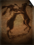 Hare Boxing Prints by Tim Kahane