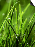 Blades of Grass with Dewdrops Print by Dirk Olaf Wexel