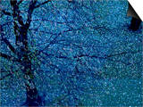 Autumn Tree in Blue, Green, and Purple Prints by Robert Cattan