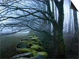 Moss Covered Stone Wall and Trees in Dense Fog Posters by Tommy Martin