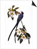 Audubon: Flycatcher, 1827 Affiches par John James Audubon