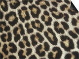 Spotted Pattern of African Leopard Fur, Panthera Pardus, East Africa Art by Adam Jones