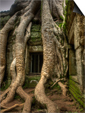 The Ta Prohm Temple Located at Angkor in Cambodia Prints by Kyle Hammons