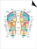 Reflexology Foot Map, Artwork Prints by Peter Gardiner