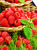 Fresh Raspberries in Two Baskets Art by Stuart MacGregor