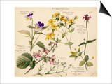 Wildflower composite Print by Lilian Snelling
