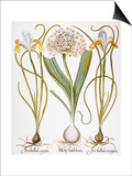 Leek And Irises, 1613 Art by Besler Basilius