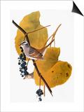 Audubon: Sparrow Posters par John James Audubon