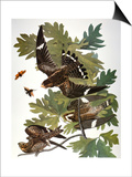 Audubon: Nighthawk Print by John James Audubon