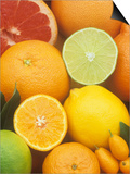 Citrus Fruits: Grapefruit, Lemon, Lime, Tangerine, Tangelo, Orange, Clementine and Kumquat Posters by Wally Eberhart