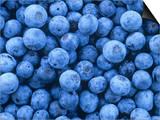 Blueberries, Vaccinium Corymbosum Posters by David Sieren
