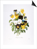 Redoute: Pansy, 1833 Posters by Pierre-Joseph Redouté