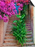 Bougainvillea Flowers, Philodendron, and Ferns on and around Building Steps, Crete, Greece Print by Adam Jones