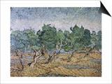 Olive Orchard, Violet Soil Prints by Vincent van Gogh