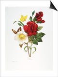 Redoute: Hellebore, 1833 Prints by Pierre-Joseph Redoute