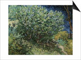 Lilac Bush Poster by Vincent van Gogh