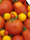 Variety of Tomatoes Posters by Wally Eberhart