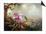 Hummingbirds and Orchids Poster by Martin Johnson Heade