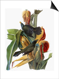 Audubon: Grackle Affiches par John James Audubon
