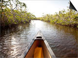 A Canoe in Mangroves, Everglades National Park, Florida Posters by Ian Shive