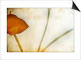 Study of Calla Lily Art by Mia Friedrich